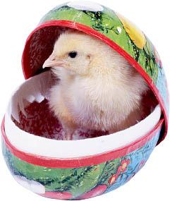 Kyckling i påskägg